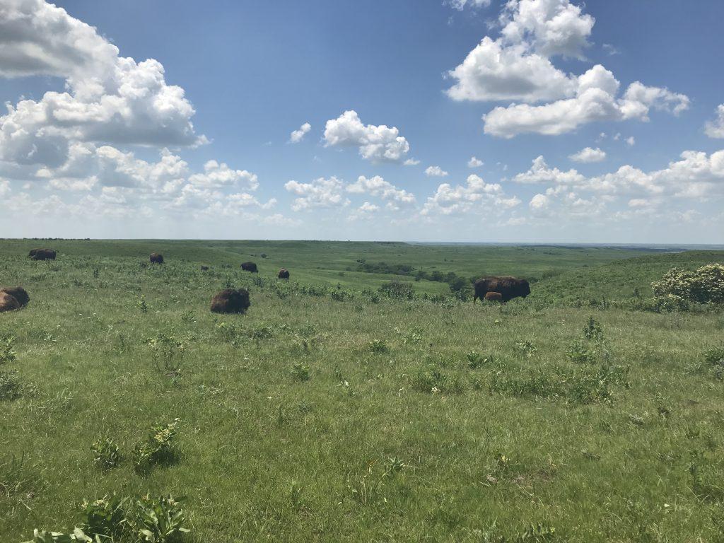 lydia konza prairie pic