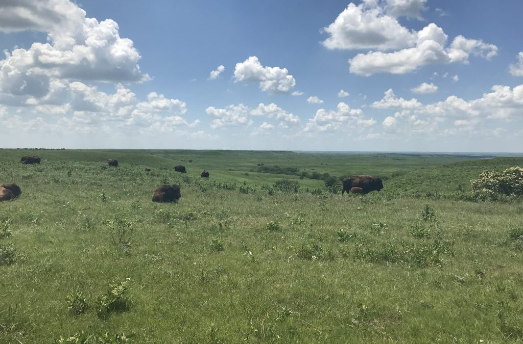 Maps researchers Dr. Jesse Nippert and Dr. Lydia Zeglin along with the KSU Biology Department receive NSF LTER award for Konza Prairie research